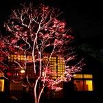 江戸東京たてもの園 紅葉とたてもののライトアップへ行きました。